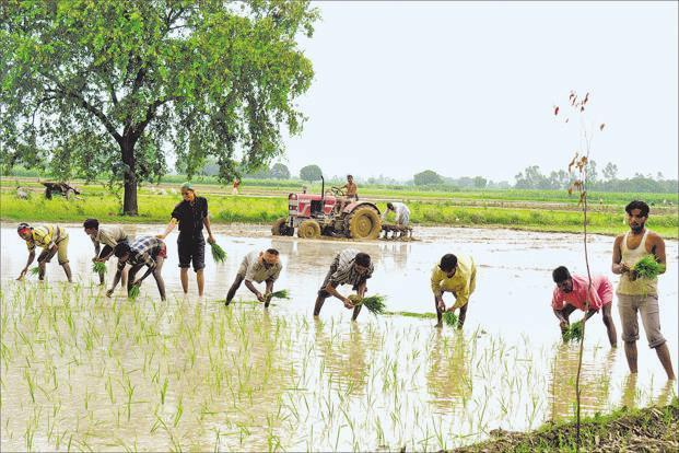 Over 50% agricultural households are facing indebtedness: Nabard